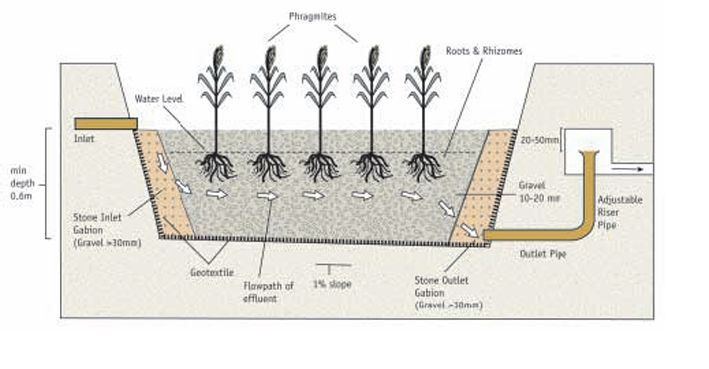 Horizontal Reed Bed Design Google Search Pond Design