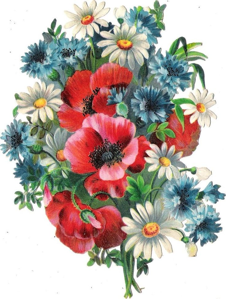 Oblaten Glanzbild scrap die cut chromo Sommer Blume 16cm corn flower poppy