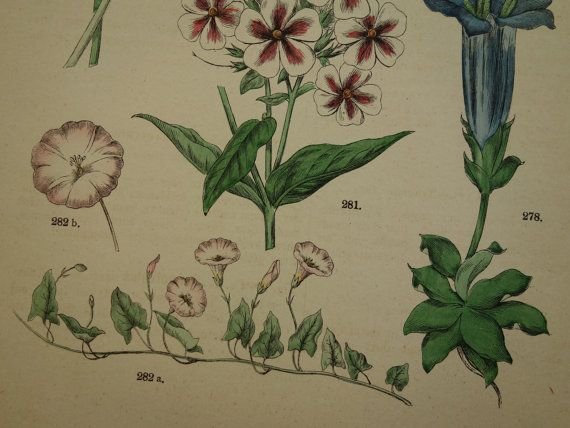 BOTANY print set of two matching old botanical by DecorativePrints