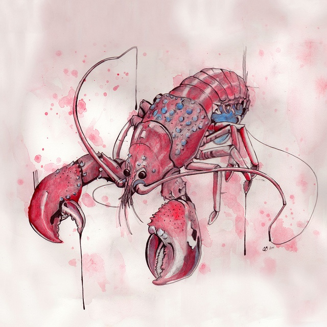 """""""Lobster""""  14x14, pencil, ink and watercolor  ©caseybrodley"""