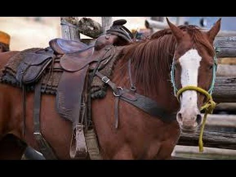 Barrel Racing | Western Saddles | Billy Cook Barrel Saddles | Barrel Rac...