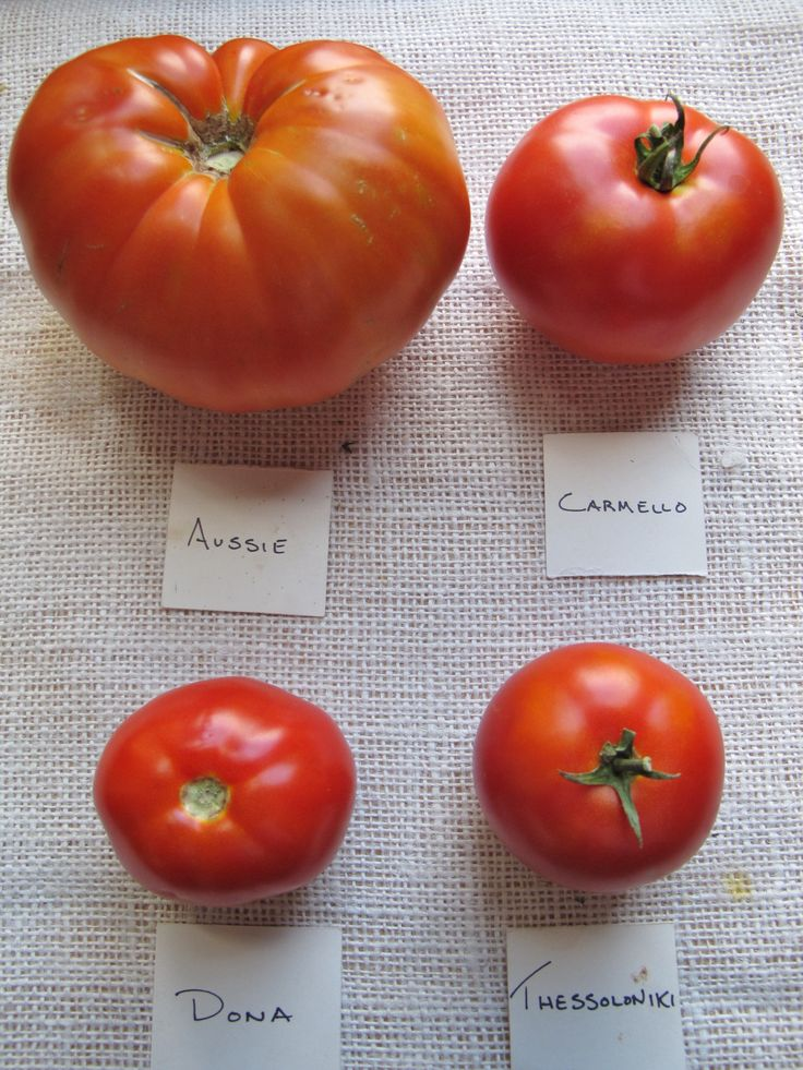 1000 Images About Tomatoes How To Grow Cook Eat On 400 x 300