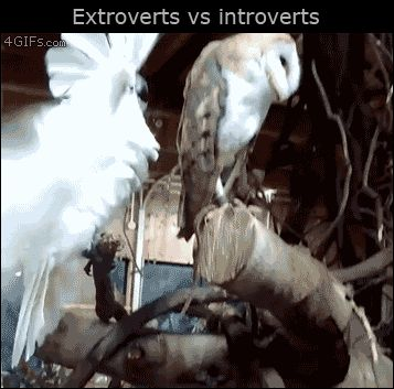 Extroverts vs. Introverts http://ift.tt/2dZrwOH