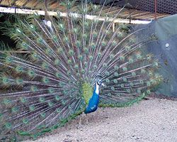 In Maharashtra you can see this type of birds.
