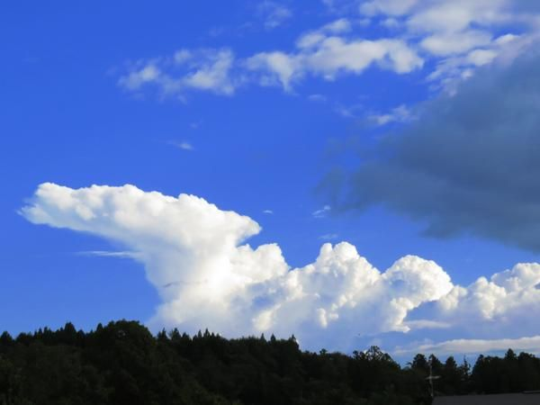 ふと空を見上げると、「あの雲○○に見える!」なんてこと、たまにありませんか?また、あの雲は何の動物に見えるかな?なんて考えるのも楽しかったりします。まるで動物のように見える雲の画像をまとめました。