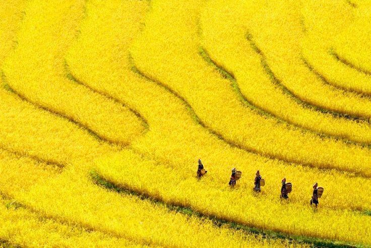 Yellow by Kyaw Kyaw Winn on 500px