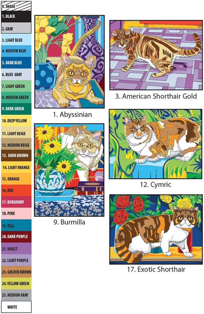 Creative Haven Cats Color By Number Coloring Book By George