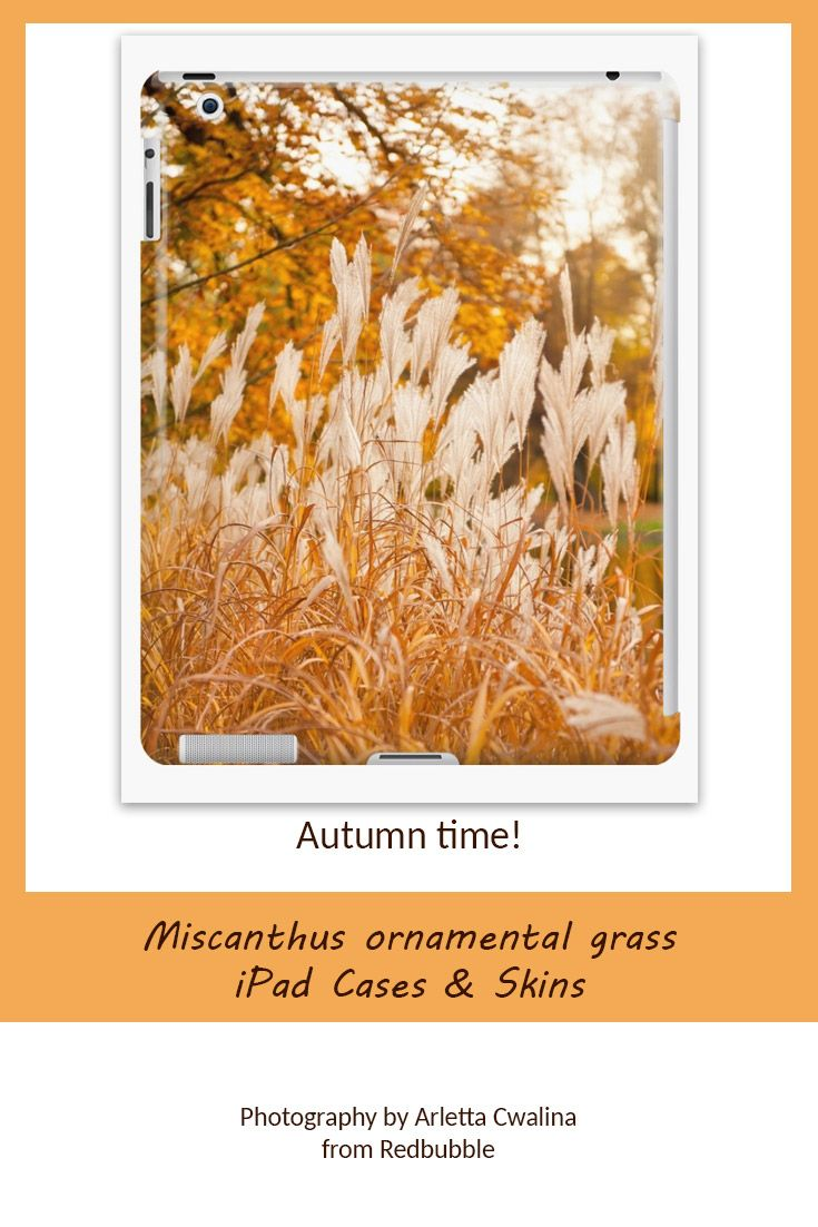 Miscanthus grass can be decorative not only in the ornamental garden but also on your ipad case or skin. Nature Photography by Arletta Cwalina/ @redbubble. See more clothes and home decor ideas and if you love it, feel free to share, maybe your friends would like to have it too :) #homedecor #ipadcase #autumn