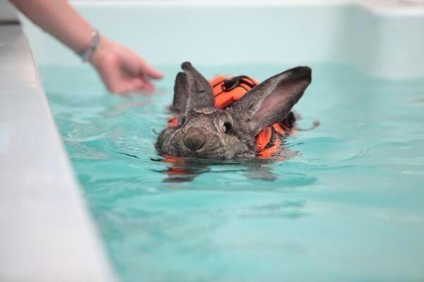 Swimming Bunny
