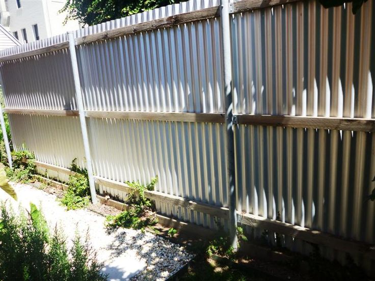 Corregated Metal Fence | Creeping Fig On The Western Fence To Cover The  Ugly Corrugated Metal