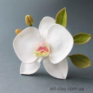 Орхидея Фаленопсис 7см