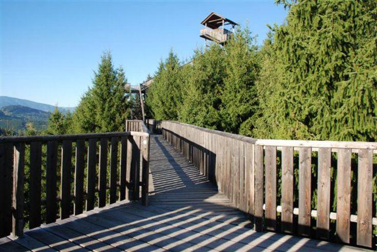 Kommen Sie dem Himmel ein gutes Stück näher – am Wipfelwanderweg Rachau! Das besondere Ausflugsziel für alle Naturliebhaber, Familien, Erholungssuchende und Wanderfreunde in der Rachau bei Knittelfeld.