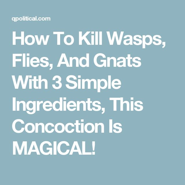 How To Kill Wasps, Flies, And Gnats With 3 Simple Ingredients, This Concoction Is MAGICAL!