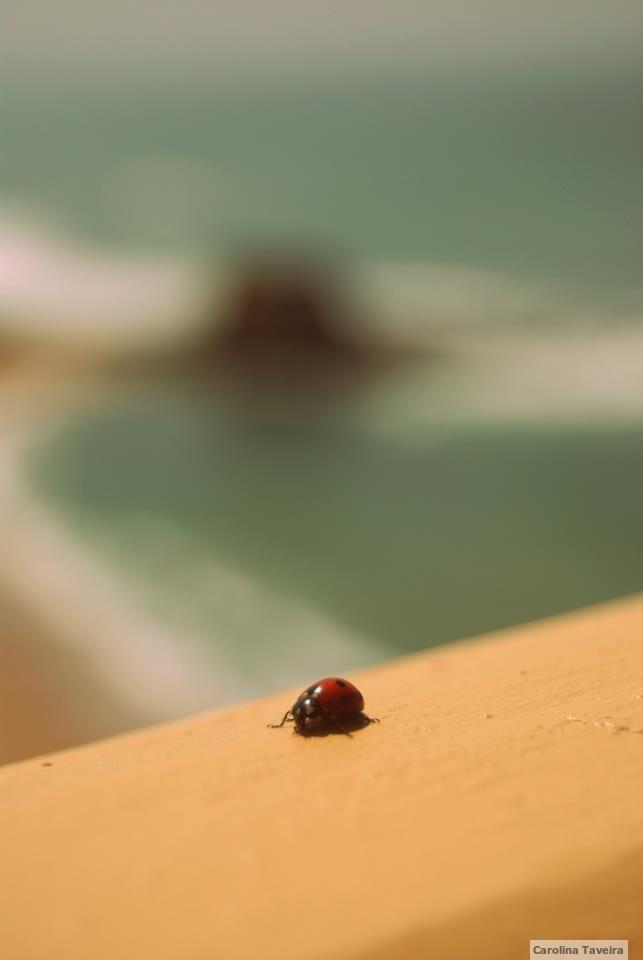 #joaninha #ladybug