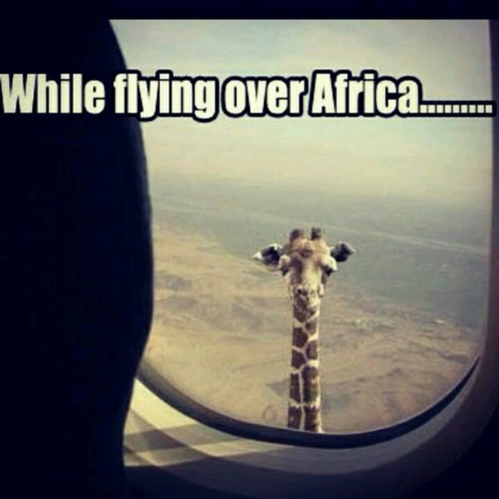 While flying over Africa ... #Humor #Giraffe #Airplane www.Your24hCoach.com