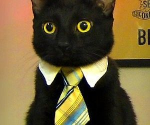 Business Cat Tie Make sure Mr. Fluffums is always looking purrrfectly professional with the business cat tie. Whether it's a business meeting, wedding, or just a viewing of a new age rendition of 'Of Mice and Men' – the cat tie will ensure he's looking downright dapper.