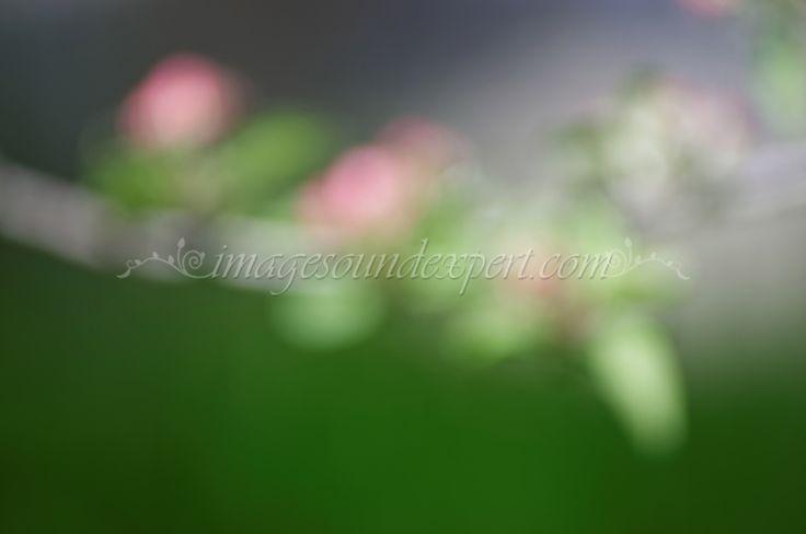 spring pink flower  background