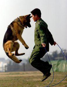 10 fotos que capturan los momentos más leales de los perros militares