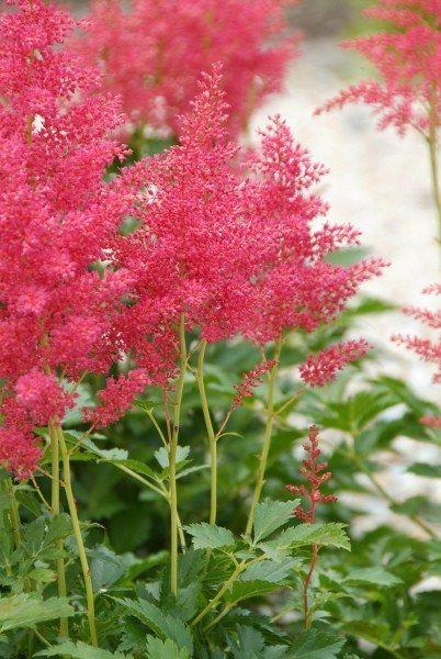 Bodembedekkers: tips voor het planten en onderhoud en aanraders - Groen van bij ons - Bloemen en planten