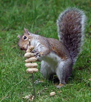 I didnt realize there was such a thing.haha - Squirrel Appreciation Day January 21st!!