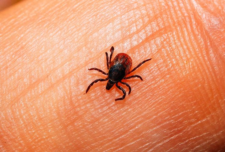 The 12 Tiniest Animals That Can Straight Up Kill You