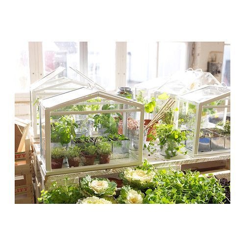 Mini szklarnia IKEA Zapewnia dobre warunki wzrostu dla nasion i roślin.Ikea Greenhouses, Minis Greenhouses, Socker Greenhouses, Miniatures Greenhouses, Indoor Greenhouses, Gardens, Green House, Ikea Minis, Mini Greenhouse