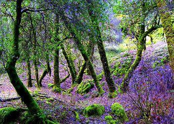 Весна в лесах гор Мендосино, Северная Калифорния