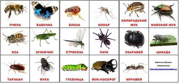 """Материалы для скачивания - карточки Домана """"насекомые"""""""
