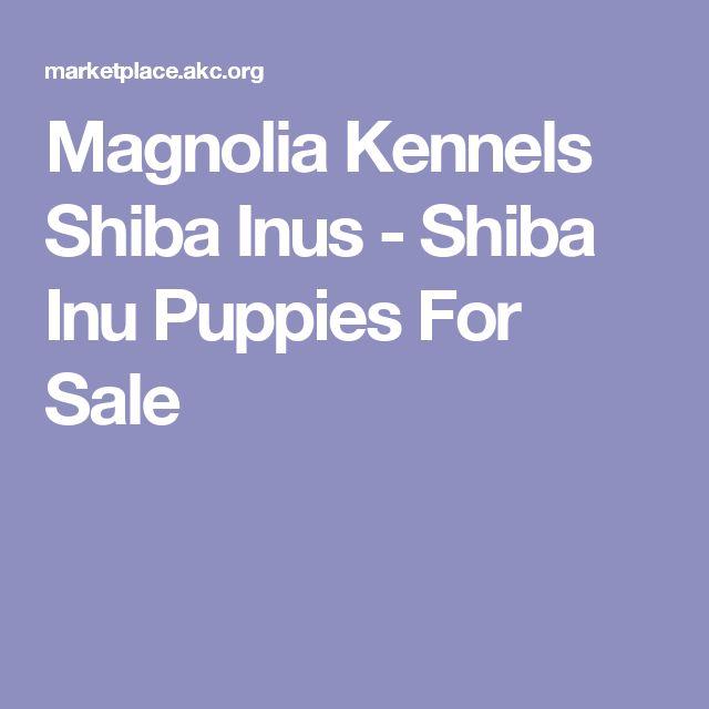 Magnolia Kennels Shiba Inus - Shiba Inu Puppies For Sale