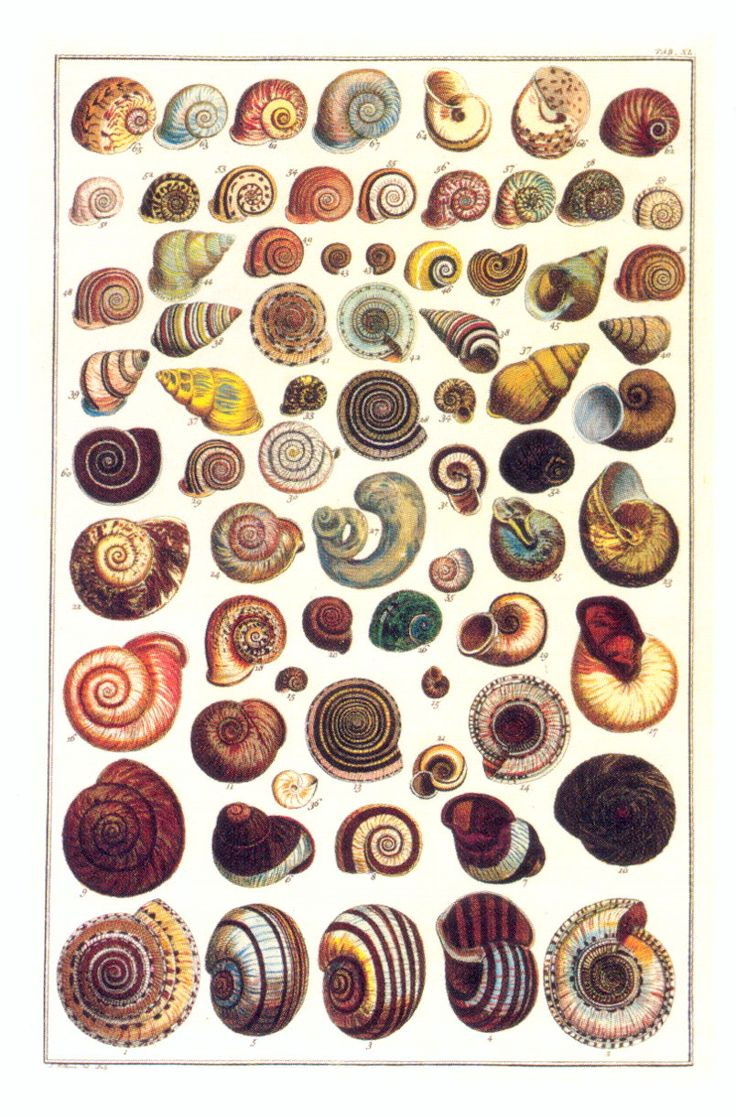 Petit Cabinet de Curiosites: Photo