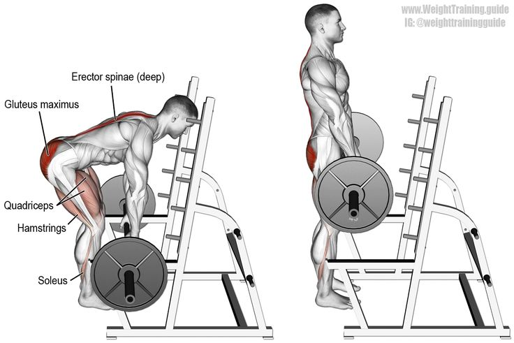 Barbell rack pull. A major back and lower-body compound exercise! Main muscles worked: Gluteus Maximus, Erector Spinae, Quadriceps, Hamstrings, Adductor Magnus, Soleus, Latissimus Dorsi, and Wrist Flexors (the latter two only if you lift heavy). Use the rack pull to improve your barbell deadlift.