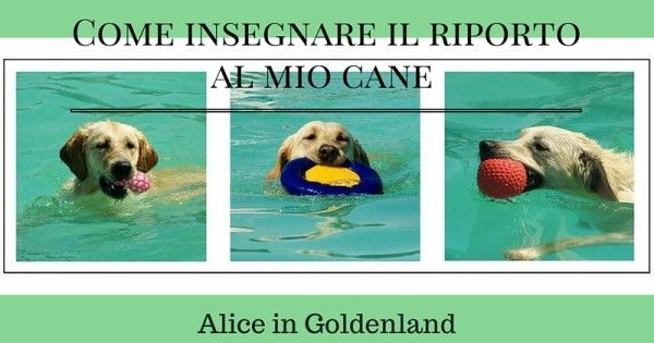 Ciao ! Vi ricordate questi due articoli http://www.aliceingoldenland.com/cani/10-funzioni-del-gioco-nel-cane dove vi ho parlato dell'importanza del gioco nel cane. e poi l'altro articolo http://www.aliceingoldenland.com/cani/8-regole-per-giocare-in-modo-coretto dove vi ho parlato di come giocare...