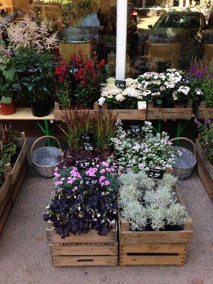 Buddleja-floristik.de  Sortiment: Außenaufbau