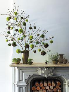Verwenden Sie anstelle eines Weidenzweiges doch einmal eine ganze Pflanze als Osterdekoration.