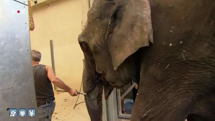 """We call for the reunification of the elephant """"Maya and Nanda Circus Busch in a rescue center or sanctuary for the animals! The two female elephants lived together for years and had a very strong connection."""