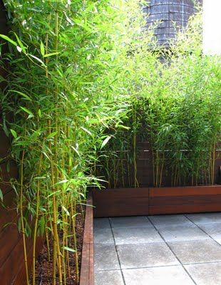 bamboo could definitely work, I just don't like the plant itself                                                                                                                                                                                 More