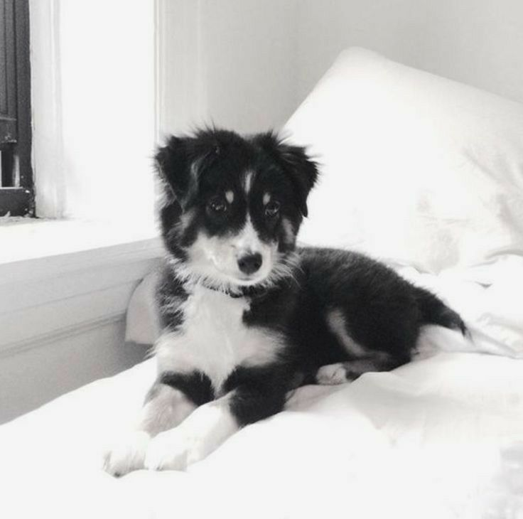 Pin By Emma Bowman On Man S Best Friend Cute Animals Puppies Cute Puppies