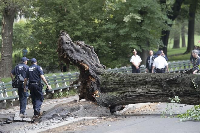 FOX NEWS: Mom kids hit by falling tree in NYC. Now she's suing for $200M A woman hospitalized after she was hit by a falling tree while protecting her three young sons is suing New York City and the Central Park Conservancy for $200 million WABC reports.