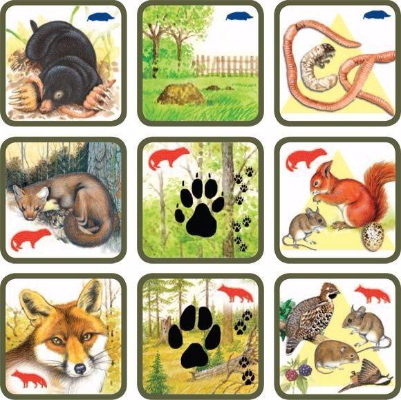 Natuurspel voor kleuters, zoek het dier bij zijn sporen en voedsel no.4, free printable