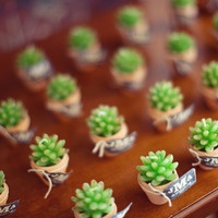 teeny tiny succulents - so cute so cute. Completely useless, but so cute.