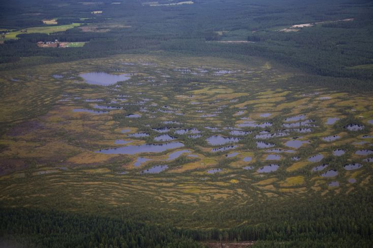 Swamp in Teuva, Finland. - photo Heikki Mahlamäki