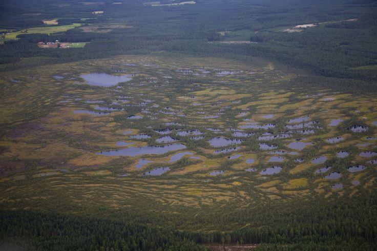 Swamp in Teuva, Finland. - photo Heikki Mahlamäki