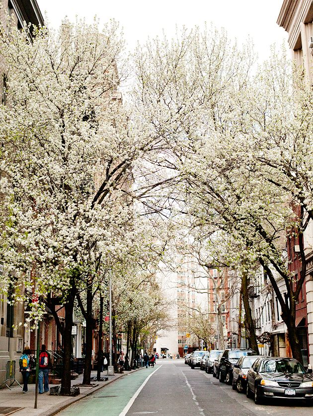 spring in the west village (nyc