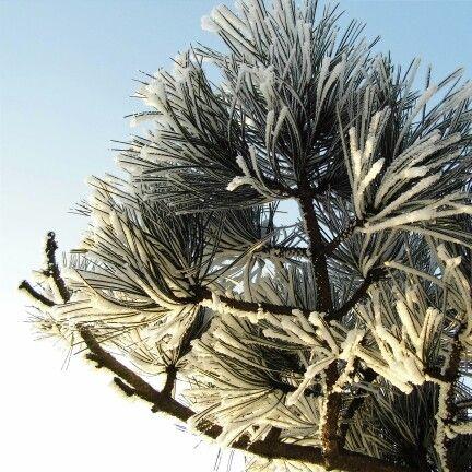 #zima #snieg #osniezone #sniezne #galazki #winter #cold #snow #snowy #sunny #slonecznie #klodzko #dolnośląskie #dolny #slask #natura #nature #vscocam #vscopoland #vscoworld