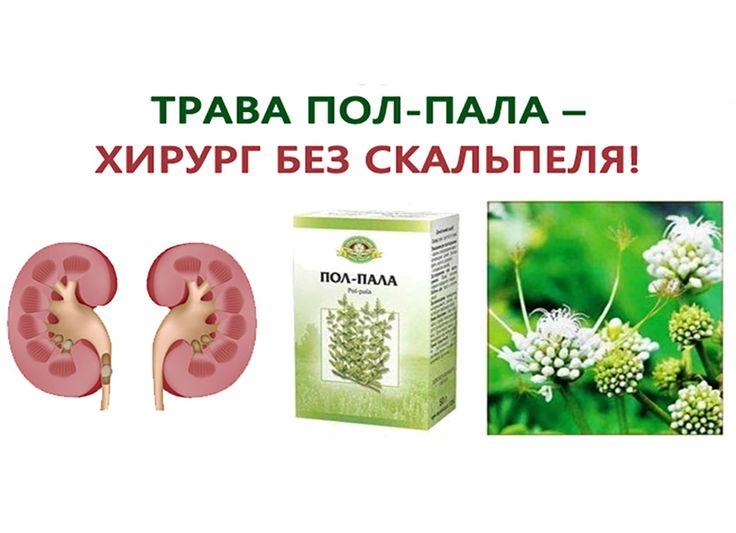Пол-пала — чудо трава! В народе недаром ее называют чудо-трава, ведь она способна заменить собой множество лекарственных средств