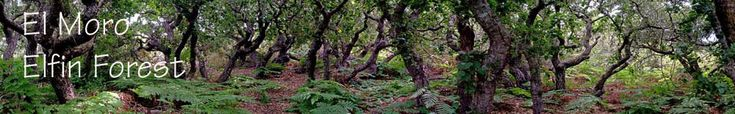 Elfin Forest in Los Osos - just across the estuary from Morro Bay. A cool little place - about 80 acres to explore