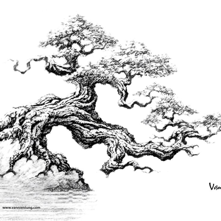 Beautiful Bonsai Sketch