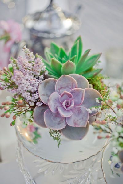 succulents & moss in tea cups