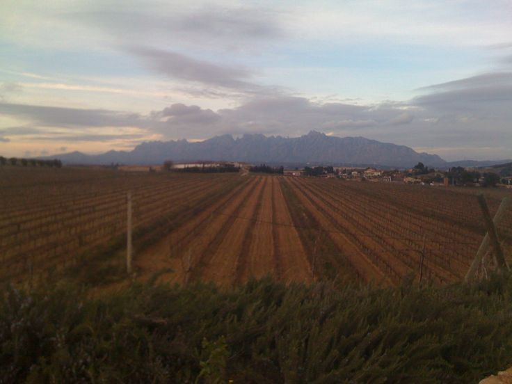Vines in front of Montserrat - the multi peaked mountain in the Cava area of Penedes, near Barcelona