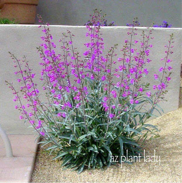 25 Best Ideas About Desert Plants On Pinterest Low